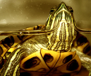 nature, turtle, and water image