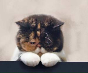 cute, cat, and sad image