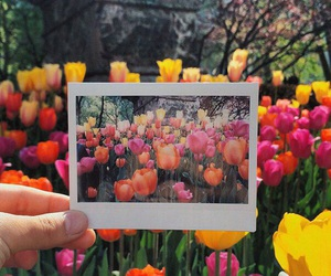 flowers, spring, and polaroid image