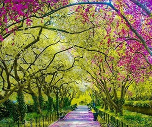 Central Park, new-york, and colors image