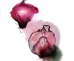christina drejenstam, illustration, and onion image