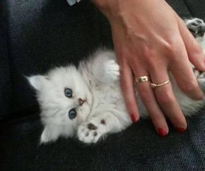 cat, cute kitten, and cute image