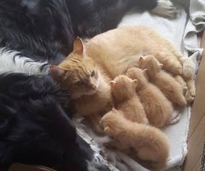 cats, dog, and cute image