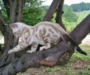 cat, pretty, and cute image