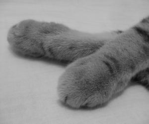 black&white, animals, and b&w image