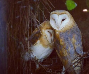 animals, owl, and love image