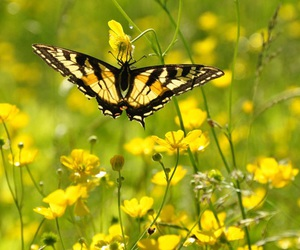 black, bright, and butterflies image
