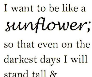 sunflower and quotes image