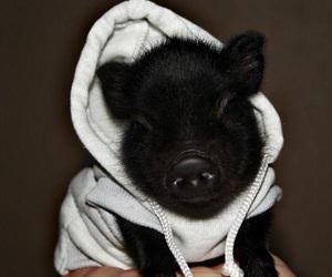 hoodie, OMG, and pig image