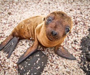 baby animals and sea lion image