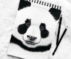 art, panda, and drawing image