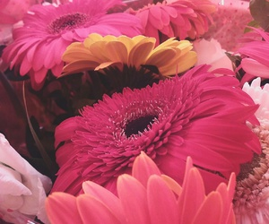 flowers, sunflowers, and pink flowers image