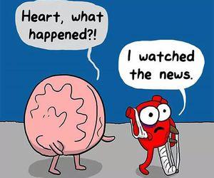 heart, brain, and news image