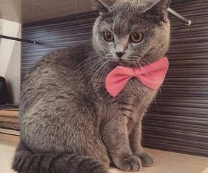cat, animal, and pet image
