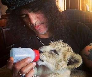 slash, lion, and cute image