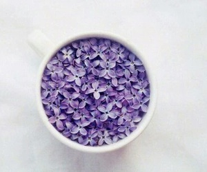 flowers, purple, and cup image