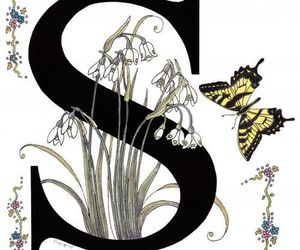 alphabet, flowers, and letters image