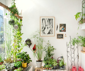 plants, green, and home image