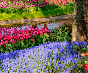 colourful, flowers, and spring image