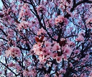 beautiful, china, and flowers image