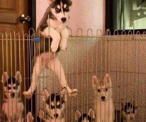 7, escape, and huskies image