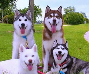 Animales and perros image