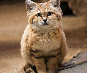 baby animals, big cats, and cats image