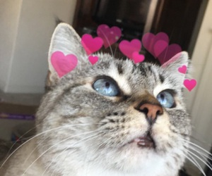 cats, kitty, and cats with hearts image