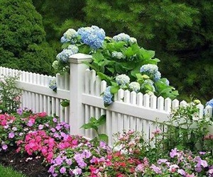 beautiful, colors, and garden image