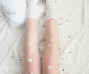 flowers, white, and legs image