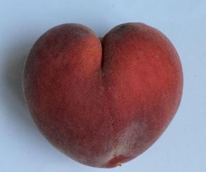 food, fruit, and gardening image