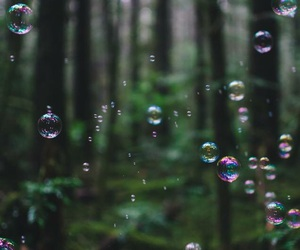 nature, bubbles, and forest image