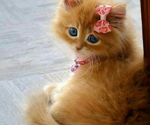 beautiful, cat, and lovely image