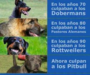 frases, sentimientos, and Animales image