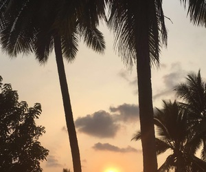palmtrees, paradise, and summer image