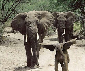 elephant, animal, and dumbo image