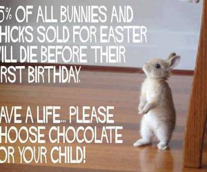 bunnies, easter, and think first image