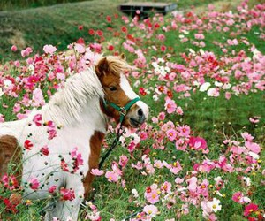flowers, horse, and pink image