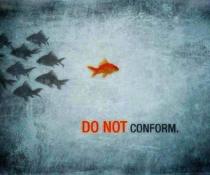 fish, conform, and do not conform image