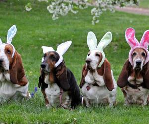 dogs, easter, and pets image