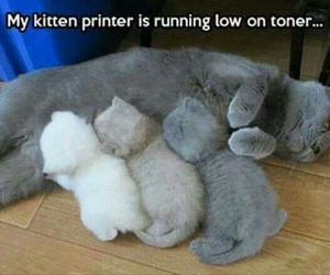 cats, funny, and kittens image