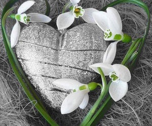 flower, love, and heart image