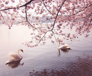nature, pink, and cute image