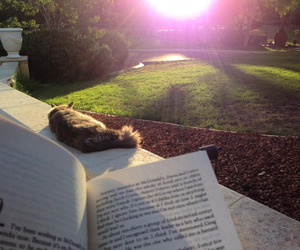 book, cat, and sunshine image