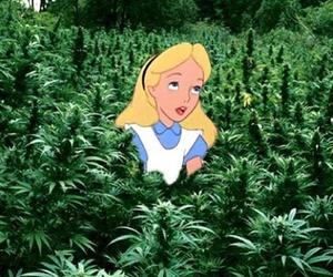 alice, weed, and wonderland image