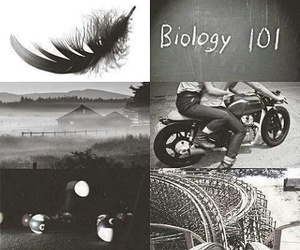 hush hush, patch, and book image