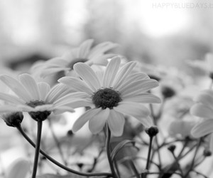 black and white, flower, and flowers image