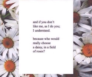 daisy, love, and rose image