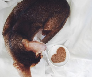 cat, coffee, and heart image