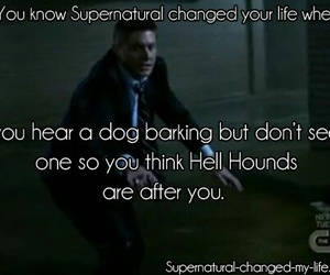 supernatural, dean winchester, and dog image